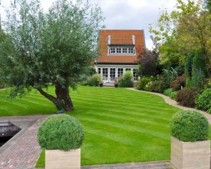Gras In Tuin : Tips gazon onderhoud
